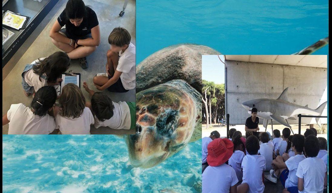 [Sindical] Fundació CRAM sense el projecte educatiu? ERO a AulaCRAM, l'espai formatiu de la Fundació per a la Conservació i Recuperació d'Animals Marins.